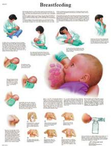 3B Scientific® Breastfeeding Chart