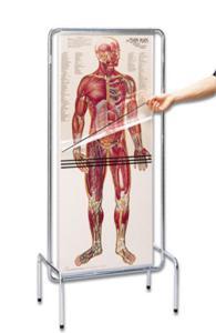 Thin Man Chart System