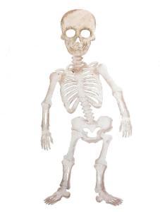 Roylco Those Bones