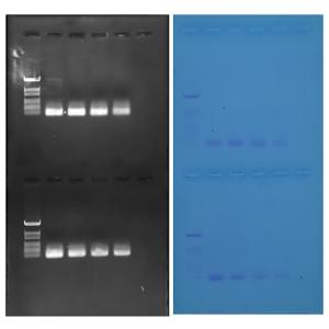 Discovering QPCR results