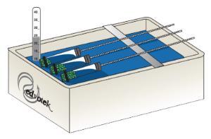 Cellular Respiration Kit