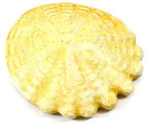 Hardouinia Fossil Replica